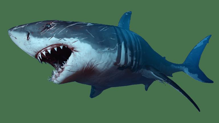 Tubarão Directart